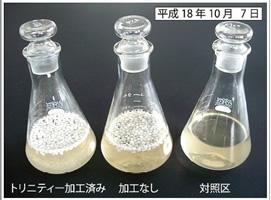 環境保全研究所 浄化植水 実験