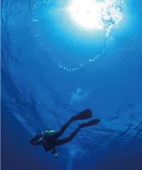 環境保全研究所 サンゴ 与那国島