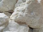 環境保全研究所 化石サンゴ