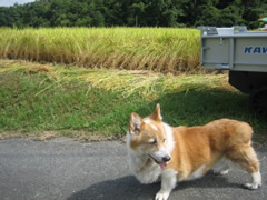 環境保全研究所 ペットの健康 体験談