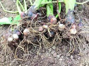 環境保全研究所 収穫量アップ 農業