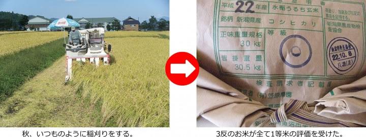 トリニティゼット 収穫量アップ