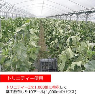 トリニティゼット 野菜 果物 効果