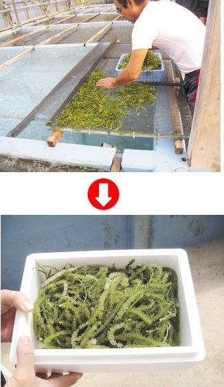 トリニティゼット 収穫量アップ 水産業