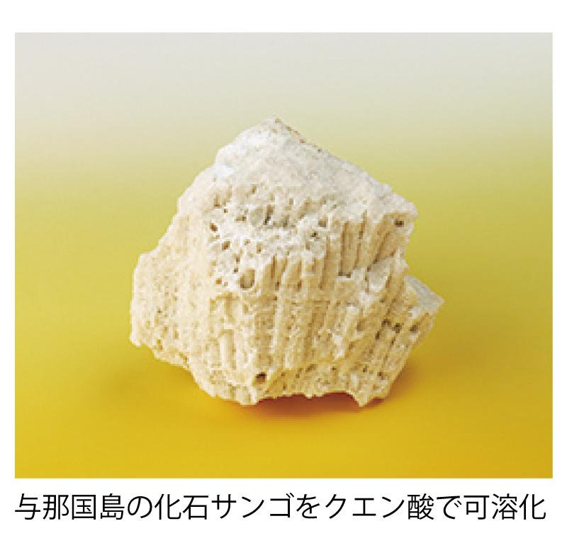 与那国島の化石サンゴ